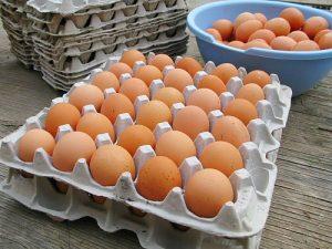 sum08_egg_trays